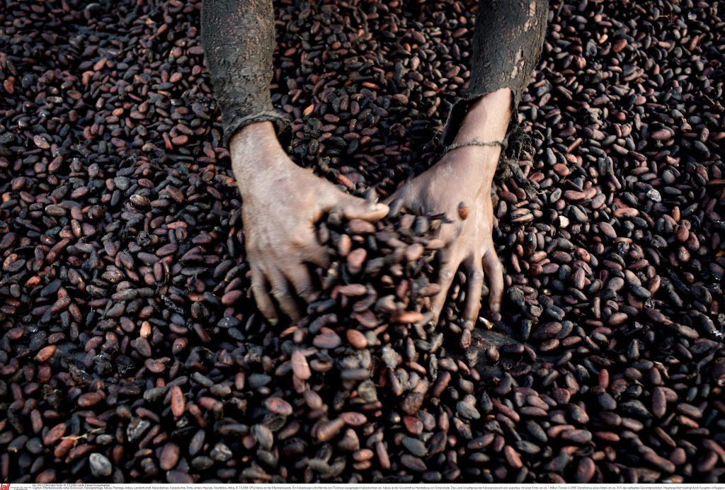 Handen in cacaobonen